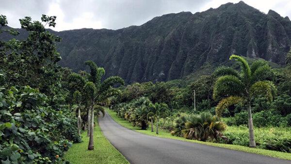 ホオマルヒア植物園【無料で釣りもできる!ハワイ最大の絶景ボタニカルガーデン】