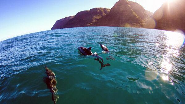 ヨコハマベイ【イルカと一緒に泳げるビーチ!治安や名前の由来は?】