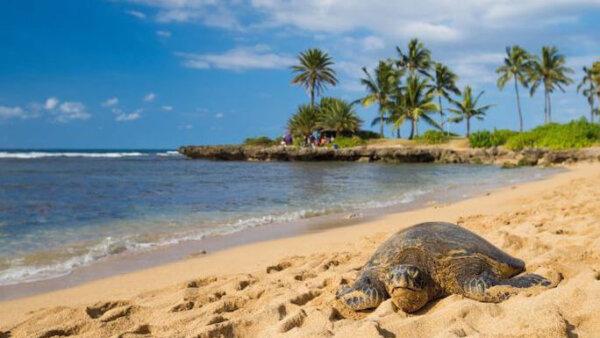 アリィビーチ【ハワイの雰囲気抜群!大人気のウミガメビーチ】