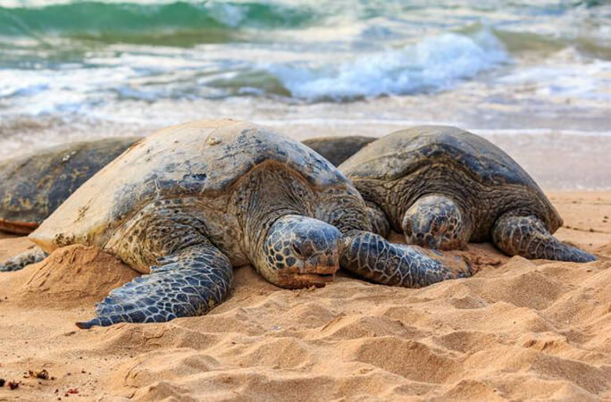 この画像には alt 属性が指定されておらず、ファイル名は laniakea-beach-1.jpg です